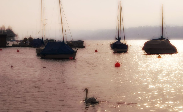 Yachts and Swan on the Limmat - Image 0