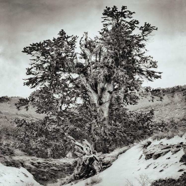 Snowfall and the path to Methuselah - Image 0