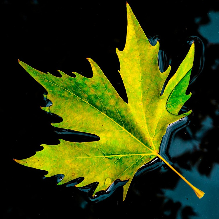 The first fallen leaf - Image 0