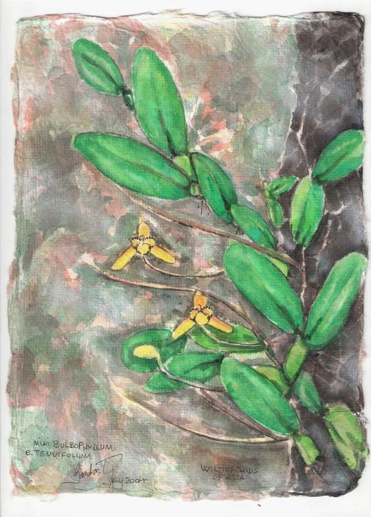 Mini Bulbophyllum B. tenuiflium - Image 0