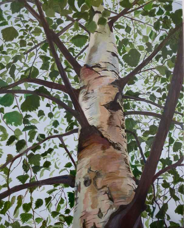 Leafy Silver Birch    SOLD