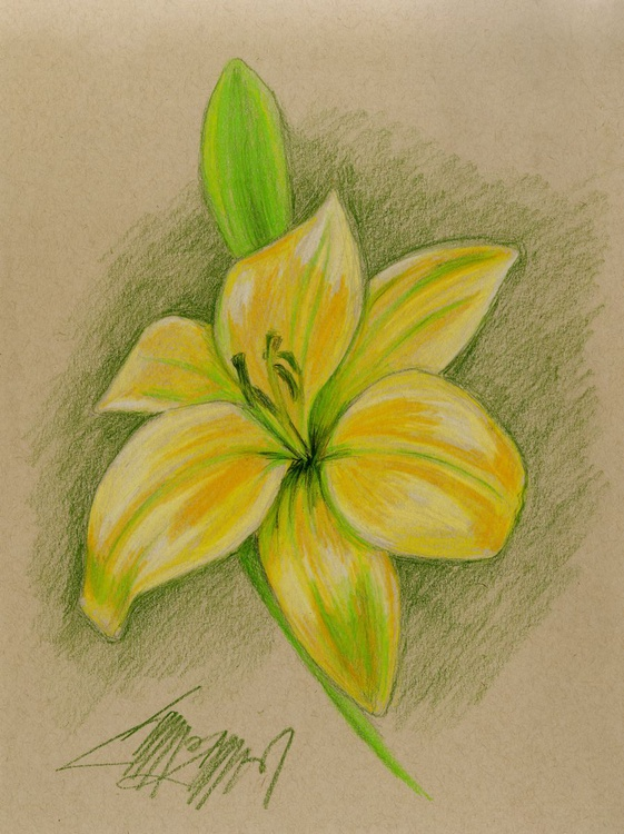 Yellow Lily - Image 0