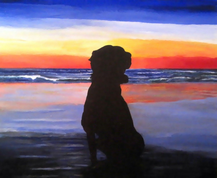 Dog on Beach - Image 0
