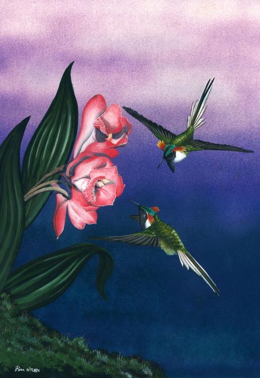 Horned Sungem Hummingbirds - Image 0