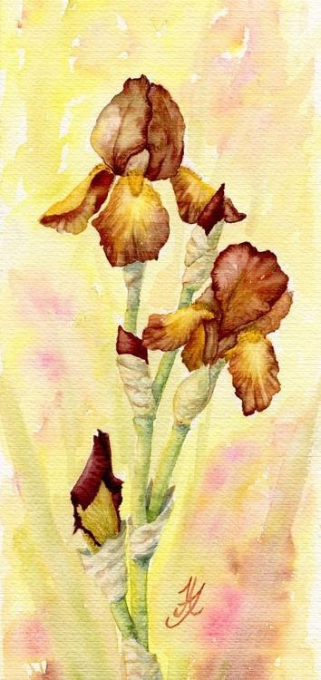 Brown Irises - Image 0