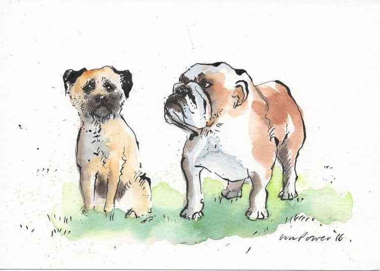 Border Terrier and Bulldog Mate