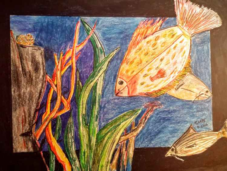 Fishy, fishy -
