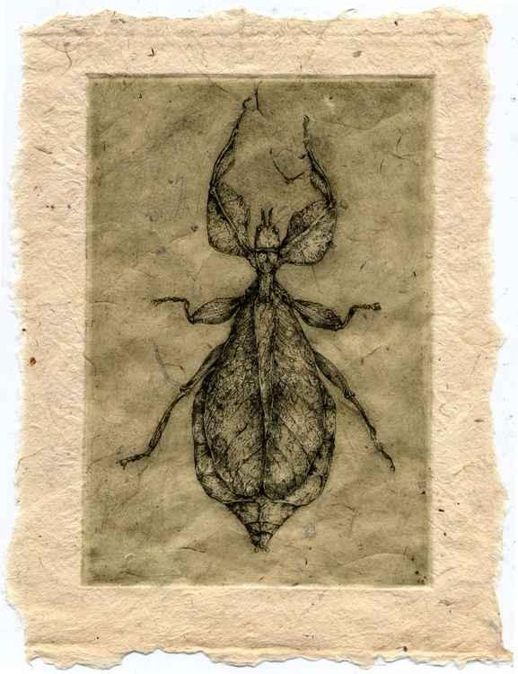 Leaf Bug -