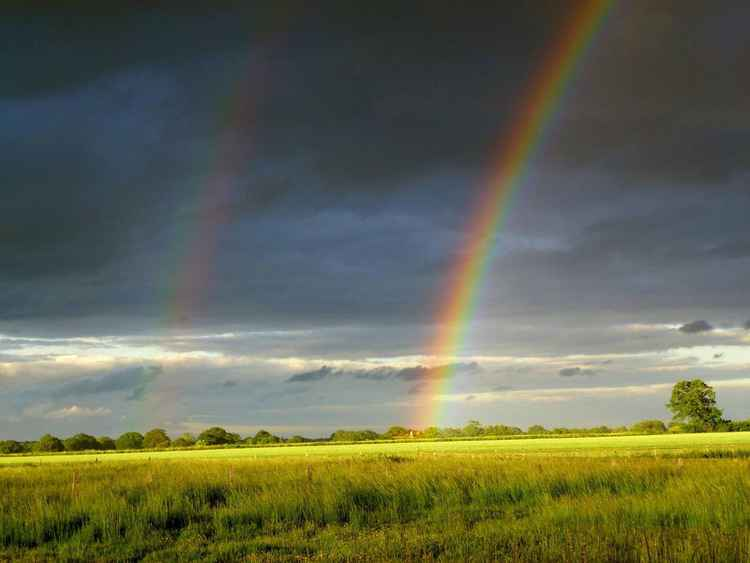 FOXLEY DOUBLE RANBOW.