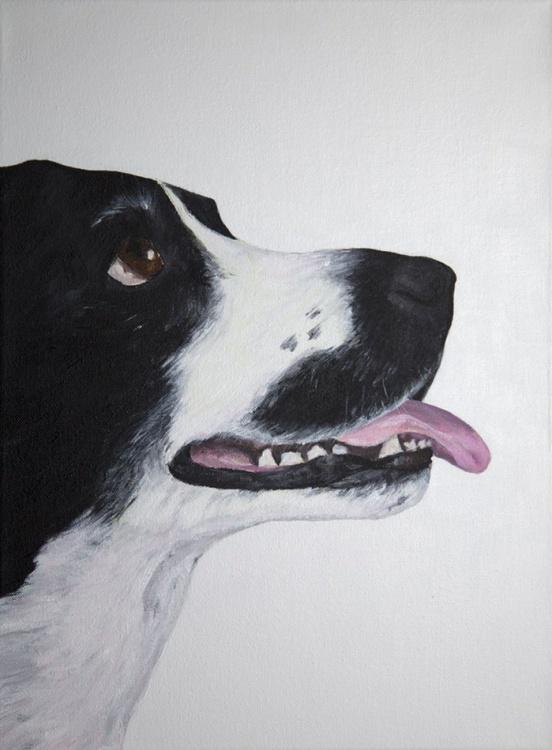 Black and white dog - Image 0