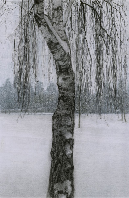 BIRCH IN THE SNOW - Image 0