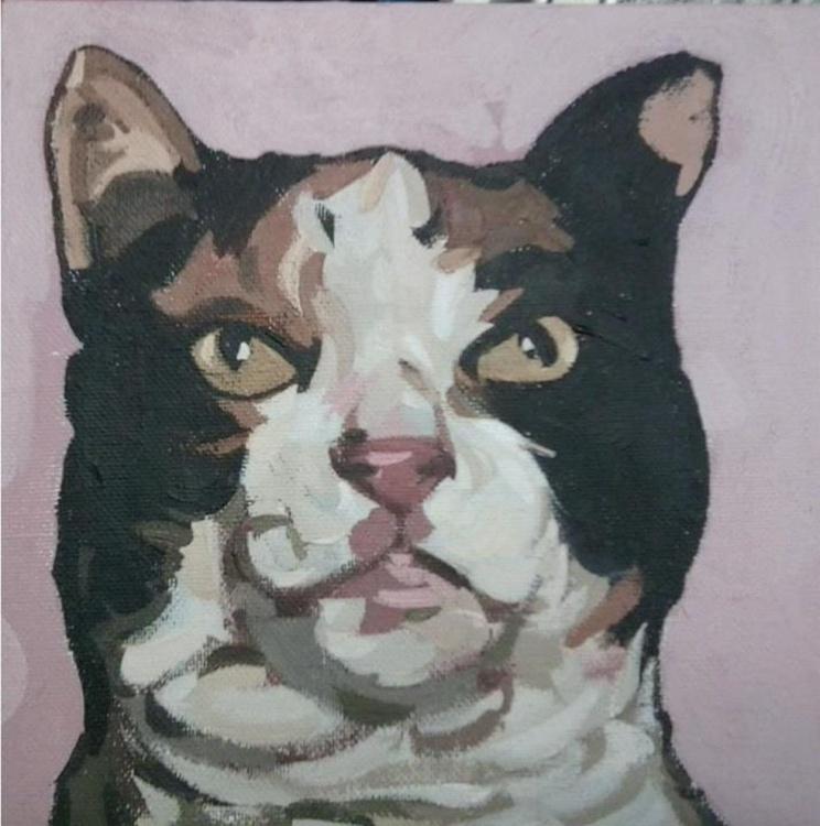 British short hair cat - Image 0