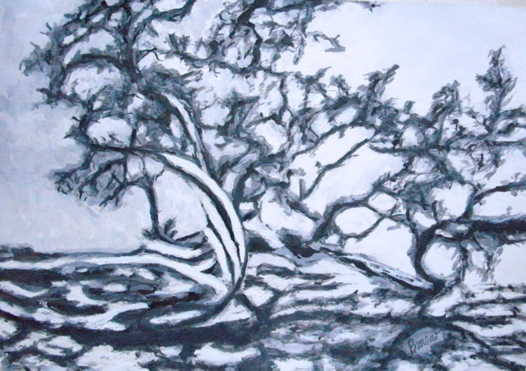 Leaning Tree - Image 0