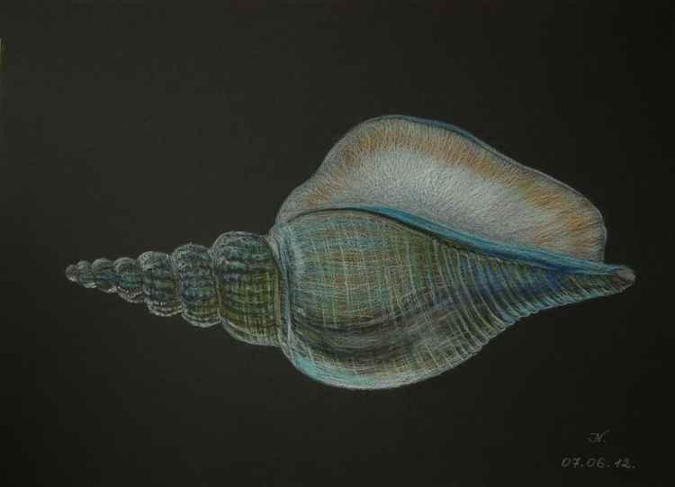 The seashell -