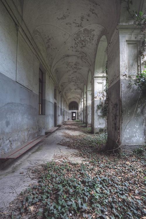 Overgrown - Image 0