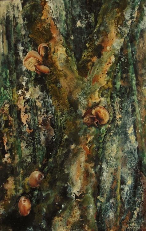 Fungi - Image 0