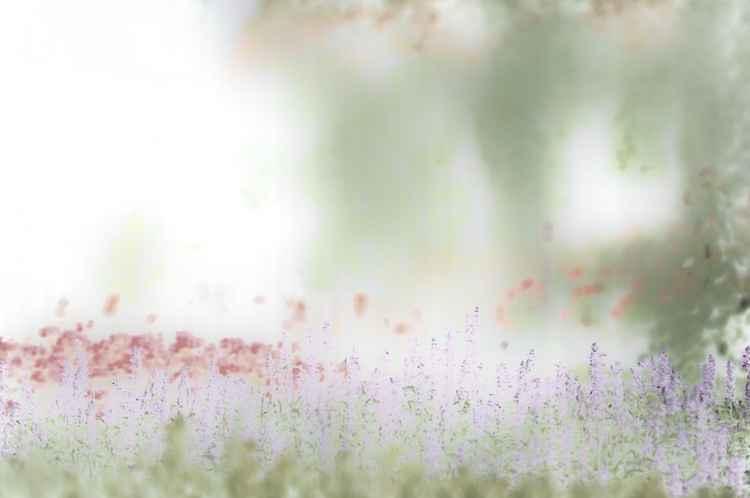 Mauve Lavender