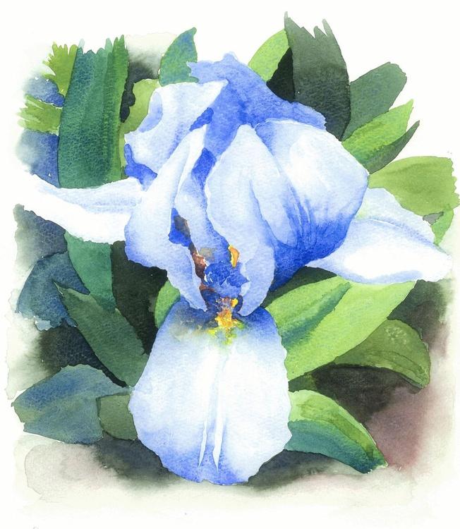 Blue iris - Image 0
