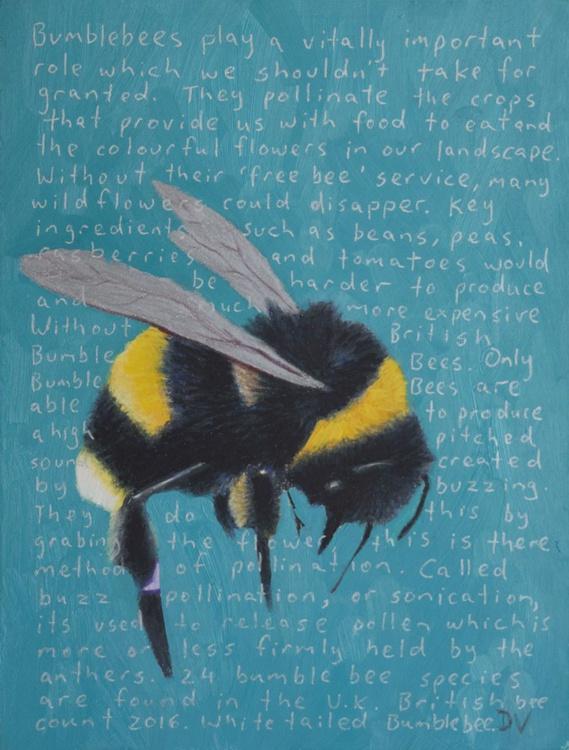 White tailed Bumblebee - Bombus Lucorum - Image 0