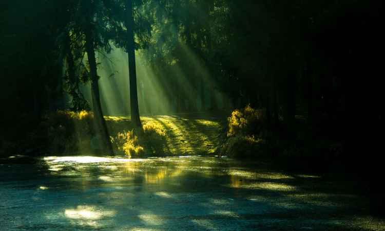 Morning rays -