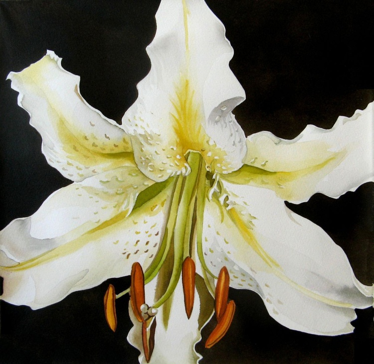 lily in white - Image 0