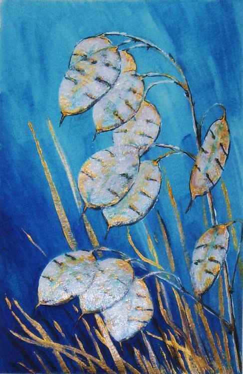 Honesty (Lunaria annua) -