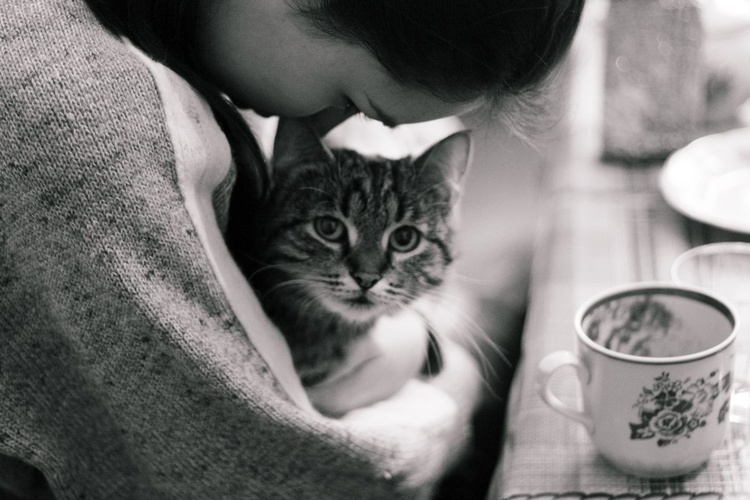 Cat therapy - Image 0