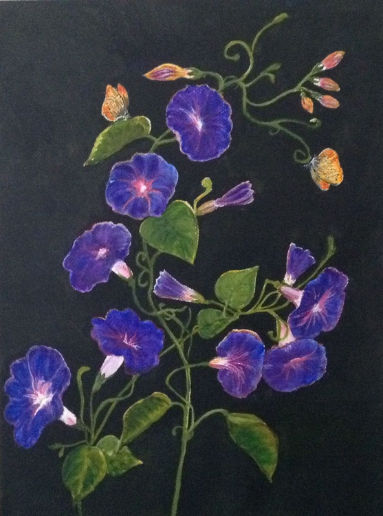 MORNING GLORY AND BUTTERFLIES - Image 0