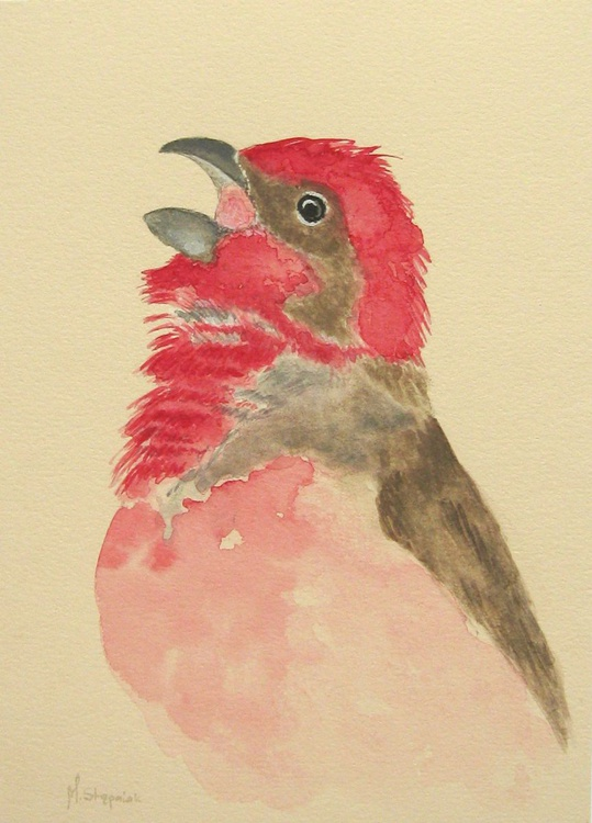 Common rosefinch - Image 0