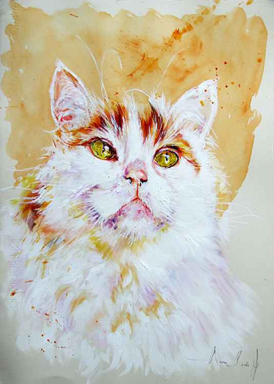 Turkish Van - Portrait of a Cat