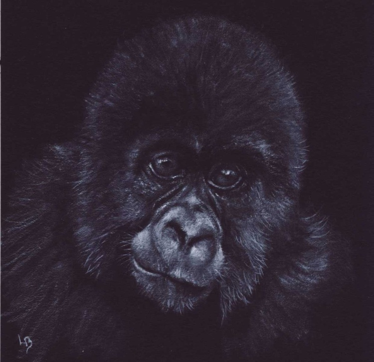Young Gorilla - Image 0