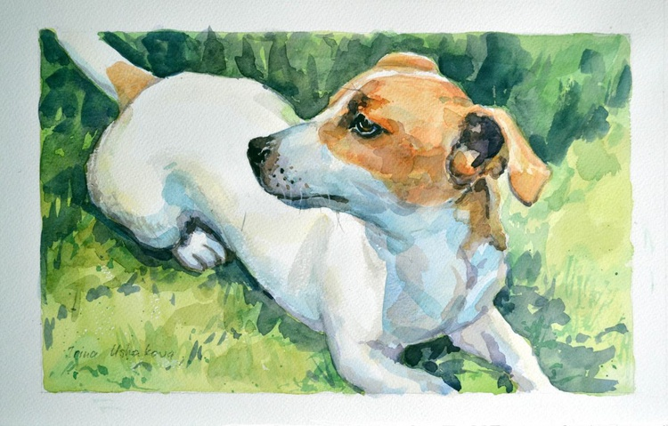 Jack Russell Terrier - Image 0