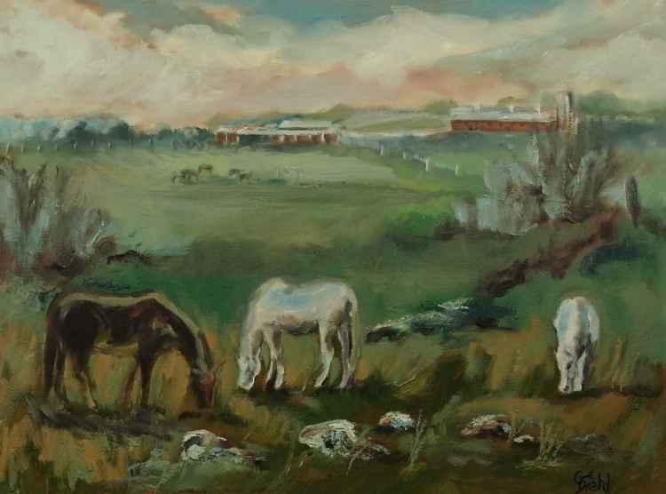 Horse Grazers -