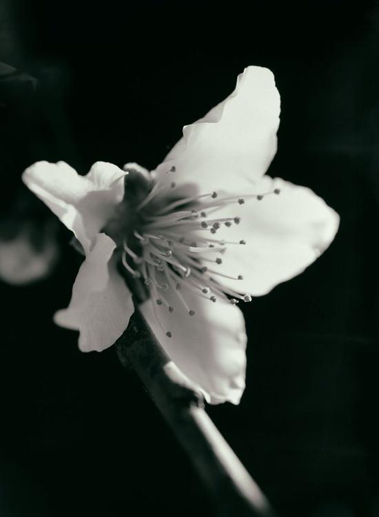 Pure Beauty 4 - Image 0