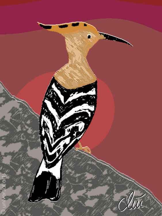 Wiedehopf (African Hoopoe) -