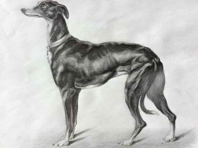 Greyhound -