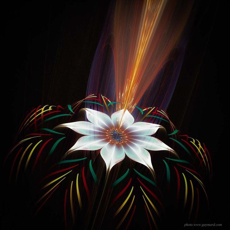 The white flower - Image 0