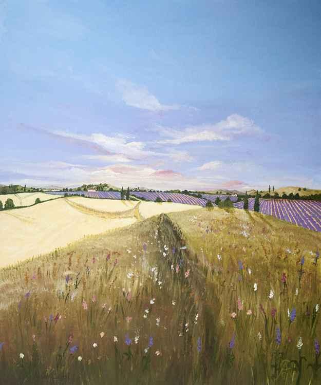 Wild Provence -