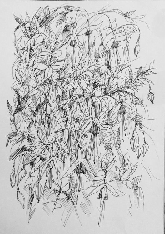 Fuchsia -ink  drawing - Image 0