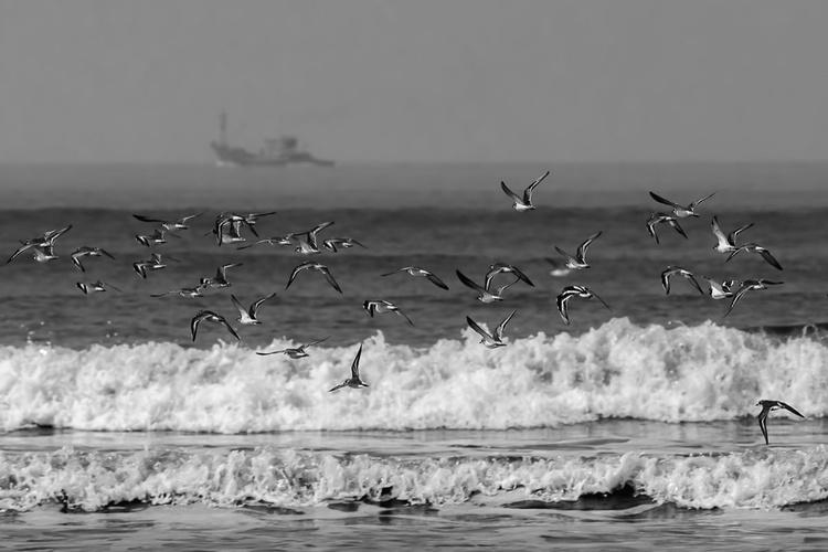 Life on shore - Image 0
