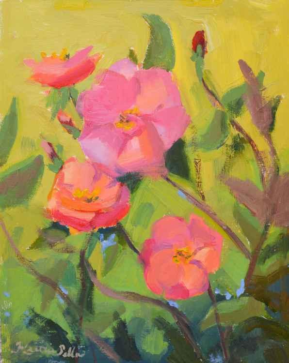 Blushing Blooms -