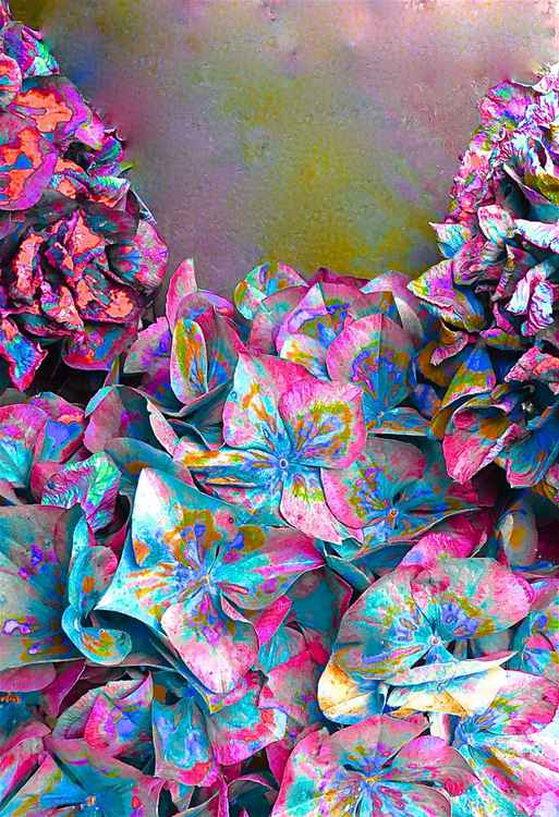 Fallen Hydrangea - Limited Edition (1 of 20) Signed and Numbered -