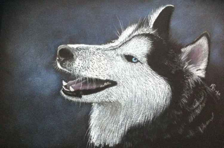 Siberian Husky -