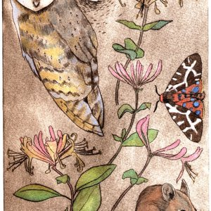 Barn owl and wood mouse by Jane Tomlinson