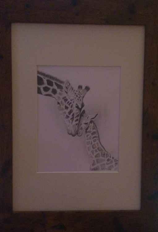 Giraffe Snuggle -