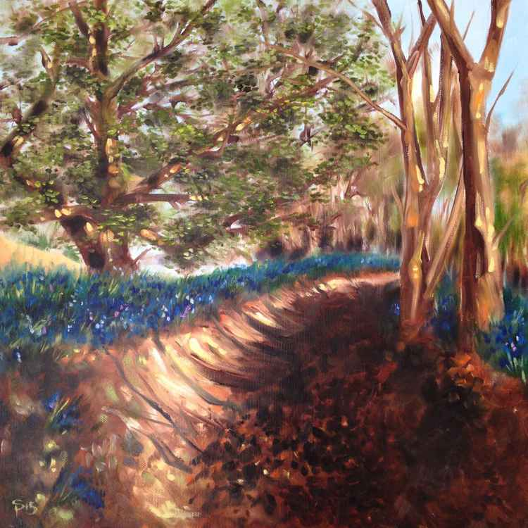 Bluebells on the way to Chequers -