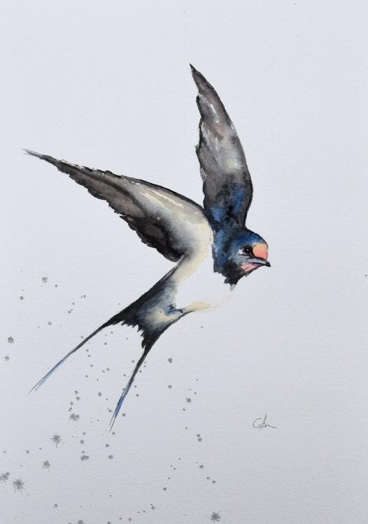 Swallow - Image 0
