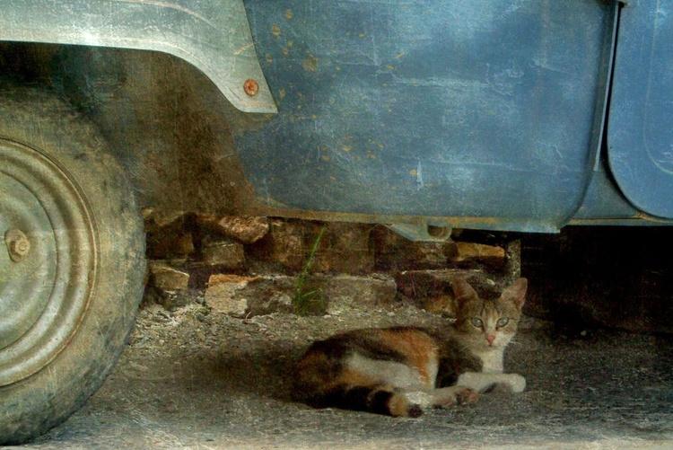 Shady Spot - Canvas 75 x 50 cm - Image 0