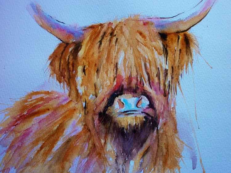 Highland cow! -