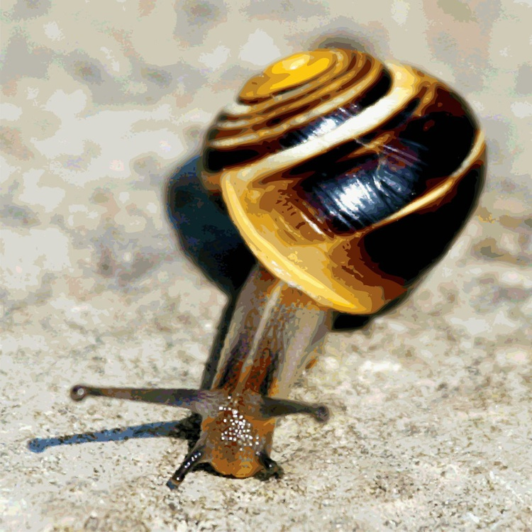Snail heading South - Image 0
